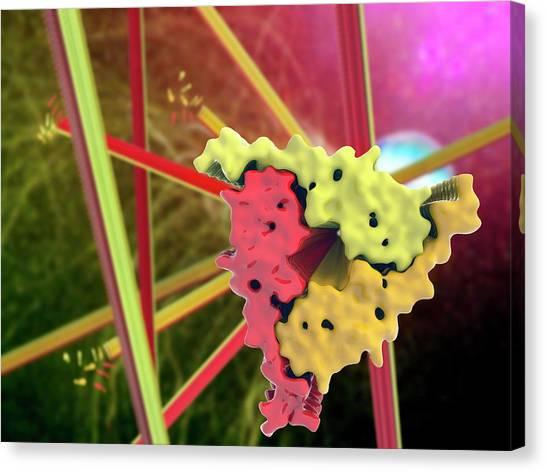 Molecule Canvas Print - Alzheimer's Beta-amyloid Fibrils by Ramon Andrade 3dciencia