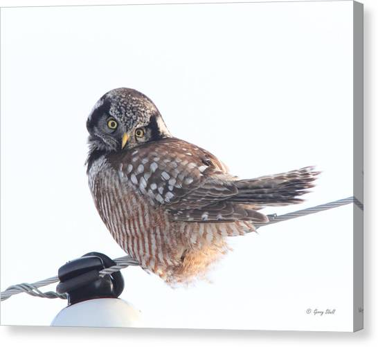 Am I Cute Canvas Print by Gerry Sibell