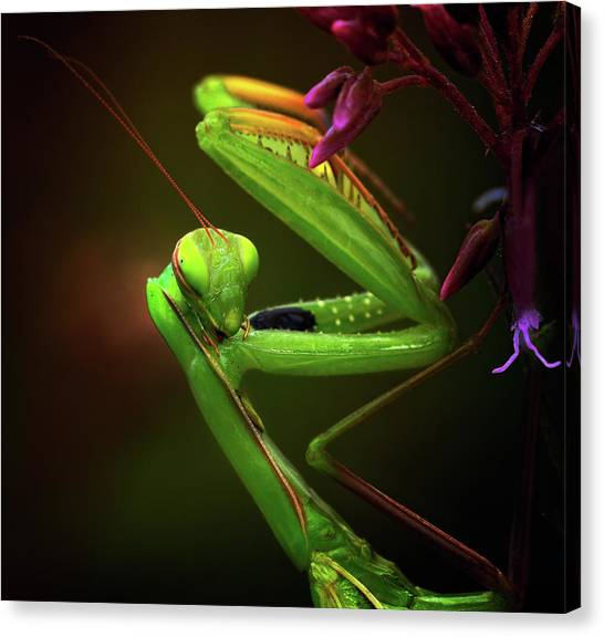 Bug Canvas Print - Am I Cute? by Izidor Gasperlin