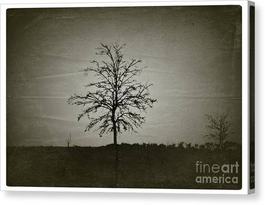 Am Trees - No.226 Canvas Print