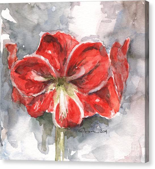 Amaryllis Canvas Print - Amaryllis by Claudia Hafner