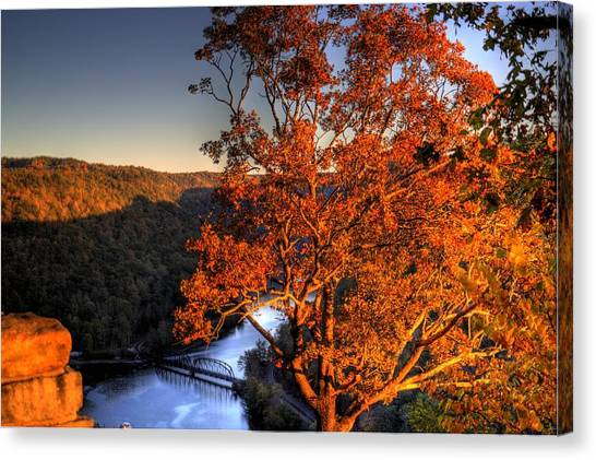 Amazing Tree At Overlook Canvas Print