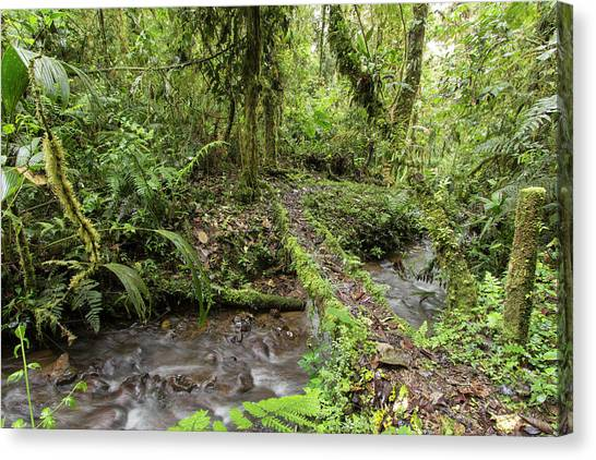 Cloud Forests Canvas Print - Amazonian Cloud Forest by Dr Morley Read