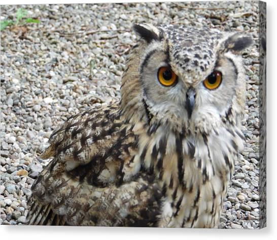 Amber Eyes Owl Canvas Print