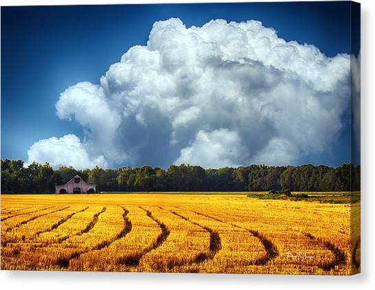 Amber Fields Canvas Print