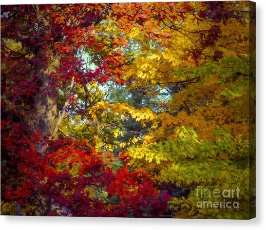 Amber Glade Canvas Print