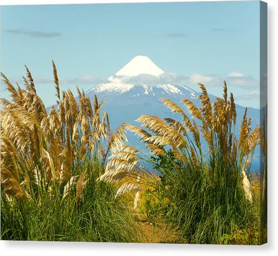 Amber Waves Of Osorno Canvas Print