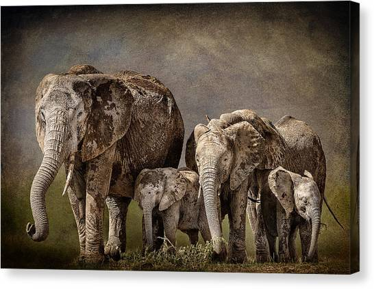 Amboseli Herd Canvas Print