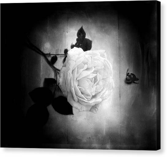 Ambridge English Rose Canvas Print