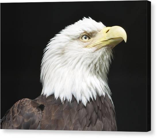 American Bald Eagle Profile Canvas Print