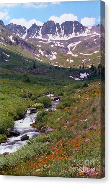 American Basin Wildflowers Canvas Print