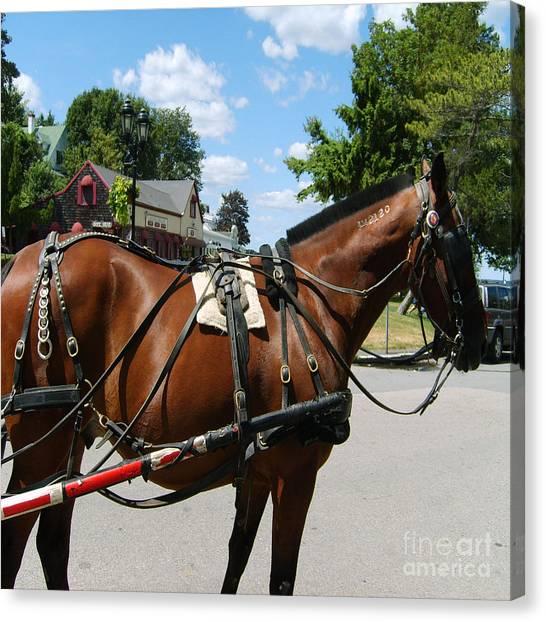 American Bay Quarter Horse Canvas Print