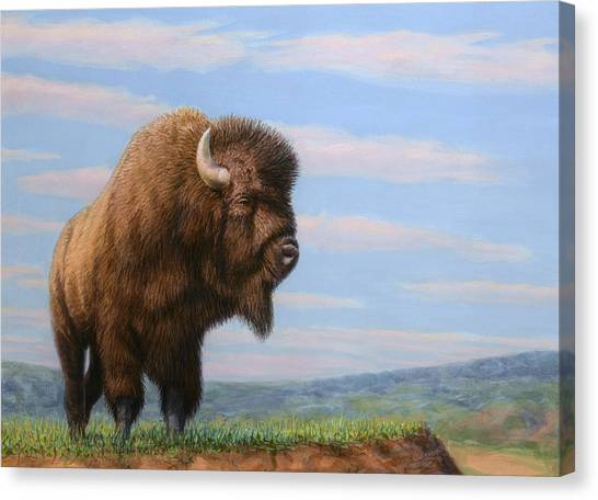 Bison Canvas Print - American Bison by James W Johnson