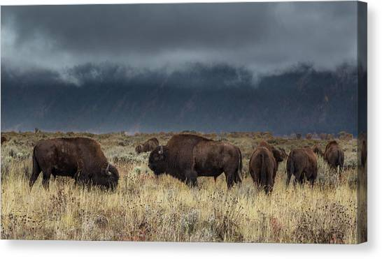 American Bison On The Prairie Canvas Print