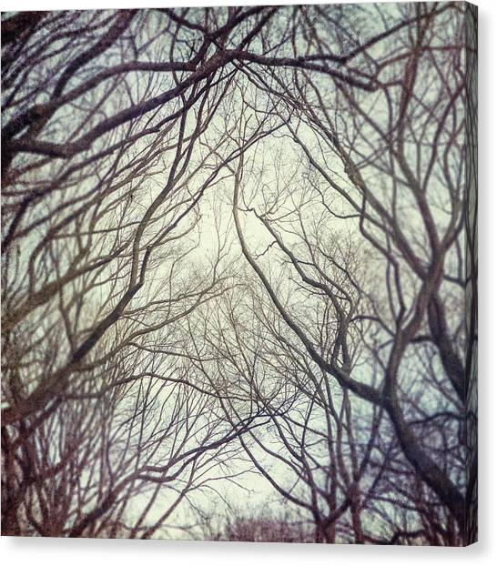 American Elm Trees Of Central Park In New York City In Winter Canvas Print by Lisa Russo