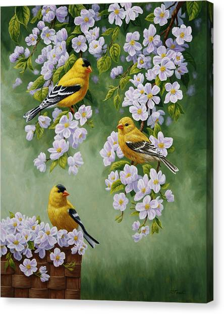 Fruit Trees Canvas Print - American Goldfinches And Apple Blossoms by Crista Forest