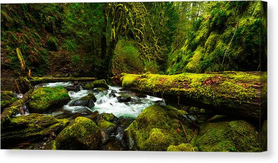 Oregon Canvas Print - American Jungle by Chad Dutson