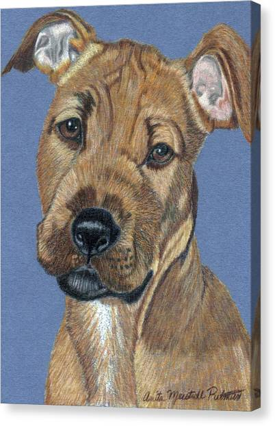 American Pit Bull Terrier Puppy Canvas Print by Anita Putman