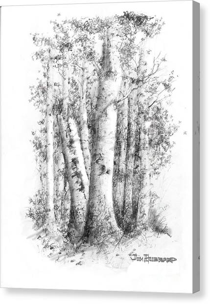 American White Birch Canvas Print