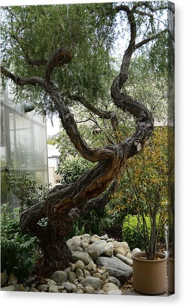 American Zen Canvas Print