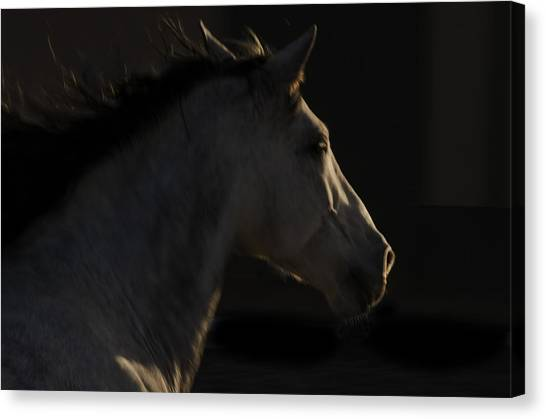 Canvas Print featuring the photograph Americano 18 by Catherine Sobredo