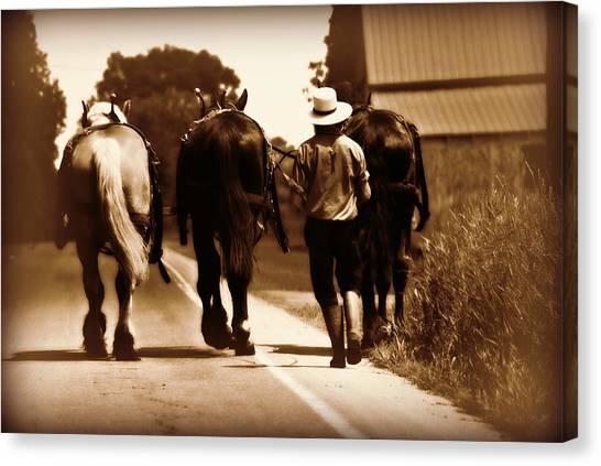 Amish Boy Farmer Canvas Print