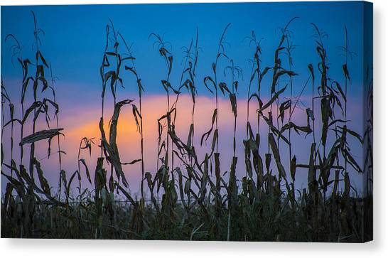 Amish End Of Harvest Canvas Print by Bruce Neumann