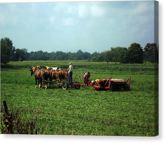 Amish Field Work Canvas Print