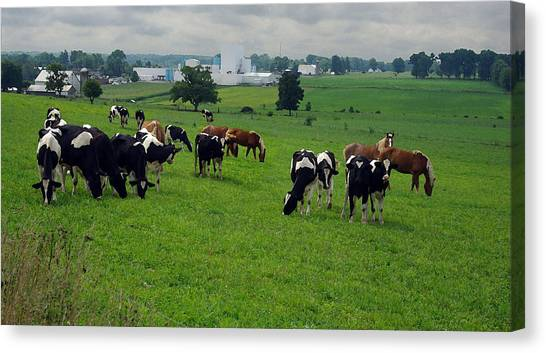 Amish Pastureland  Canvas Print