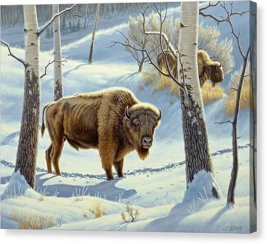 Aspen Canvas Print - Among The Aspens- Buffalo by Paul Krapf