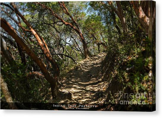 Among The Madrone Canvas Print