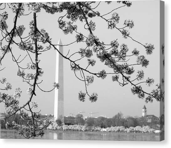 Amongst The Cherry Blossoms Canvas Print