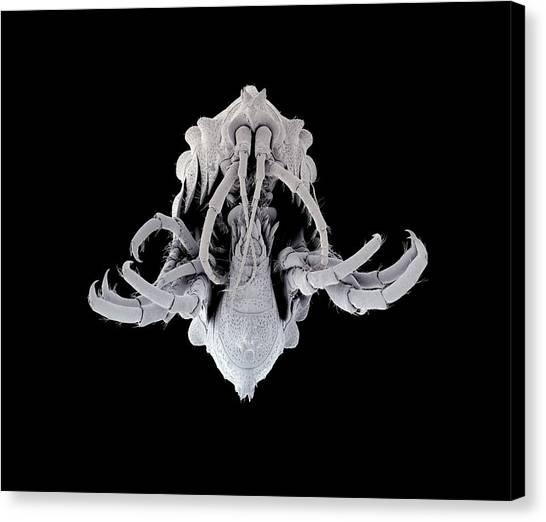 Amphipod Crustacean Canvas Print by Petr Jan Juracka