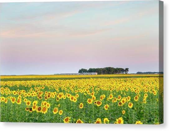 Amtrak Canvas Print - Amtrak Train Passes By Field by Chuck Haney