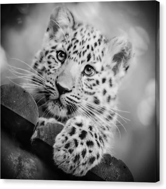 Amur Leopard Cub Portrait Canvas Print