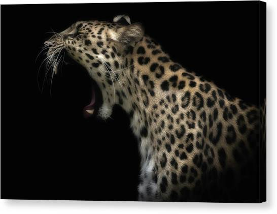 Camouflage Canvas Print - Amur Leopard (in Colour) by David Williams
