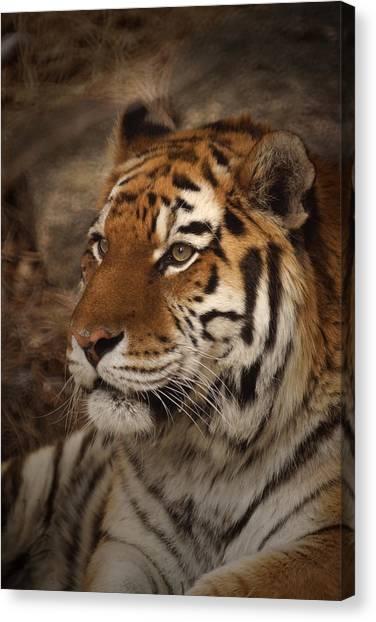 Amur Tiger 2 Canvas Print