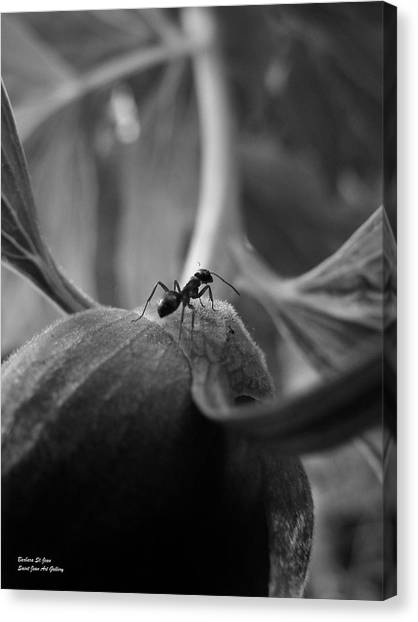 An Ant's Life Canvas Print