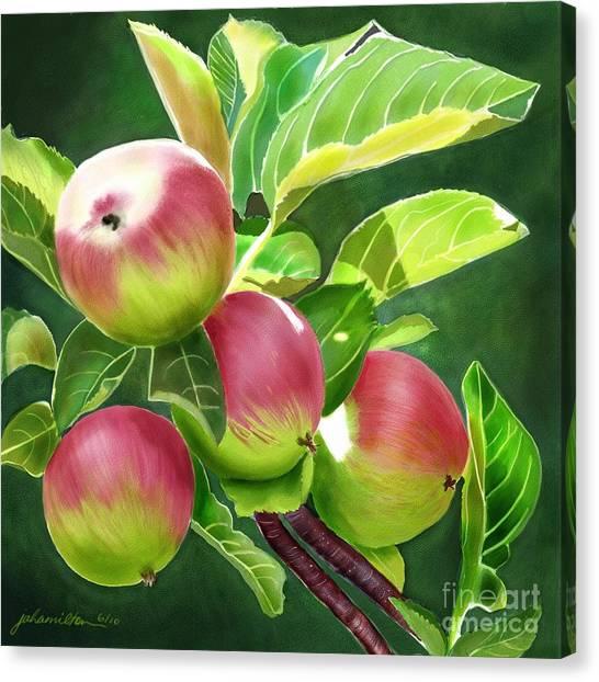 An Apple A Day Canvas Print by Joan A Hamilton