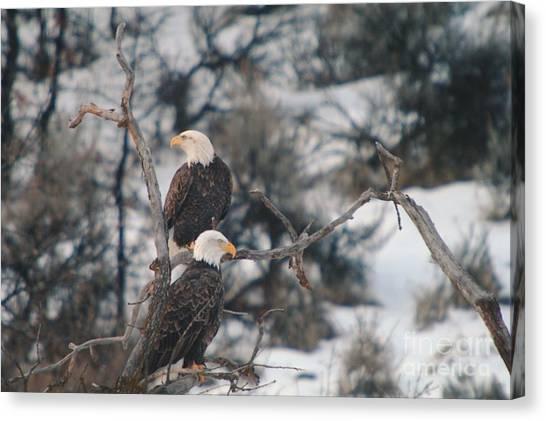 An Eagle Pair  Canvas Print