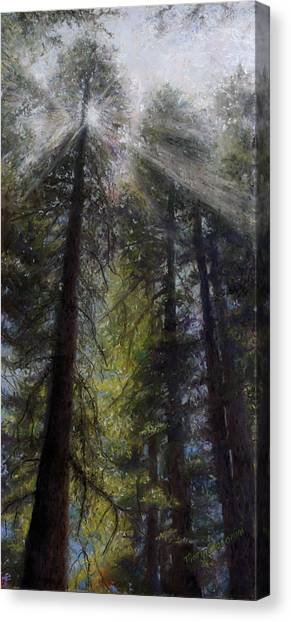 Redwood Forest Canvas Print - An Enchanted Forest by Mary Giacomini