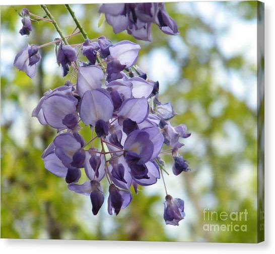 Georgia State University Canvas Print - An Even Prettier Wisteria by Cheryl Hardt Art