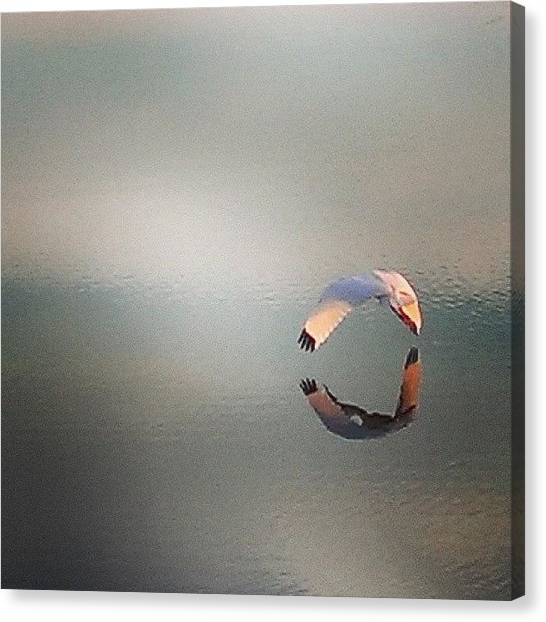 Ibis Canvas Print - An #ibis Flying Away From Me, Across by Gary W Norman