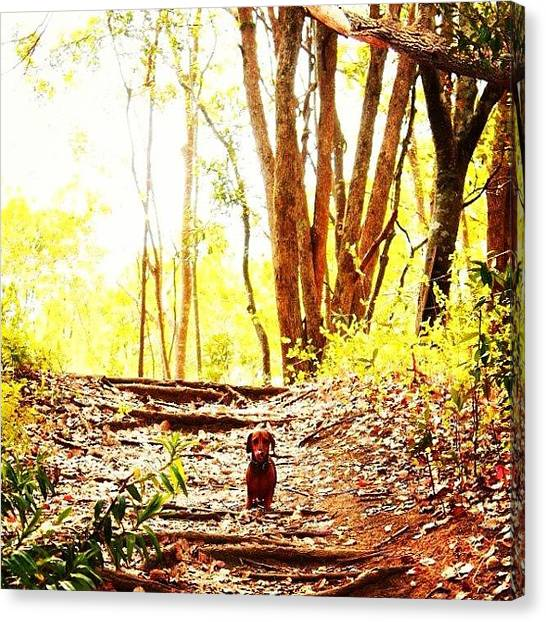 Forest Paths Canvas Print - An Old One Of Willis That I Just by Lana Houlihan