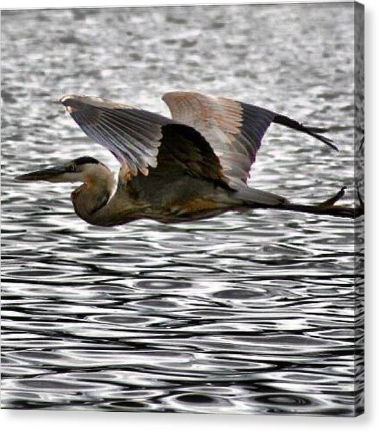 Flying Canvas Print - An Older Shot From Texas by John Wagner