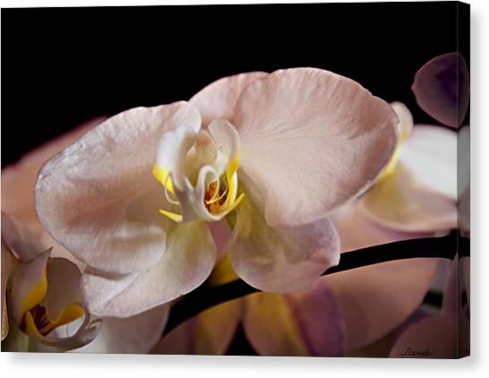 The Lisa Orchid Canvas Print