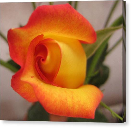 Roses Canvas Print - An Other Beauty by Josias Tomas