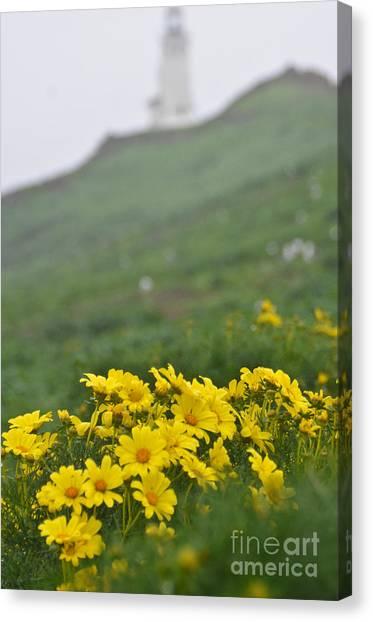 Anacapa Spring Canvas Print