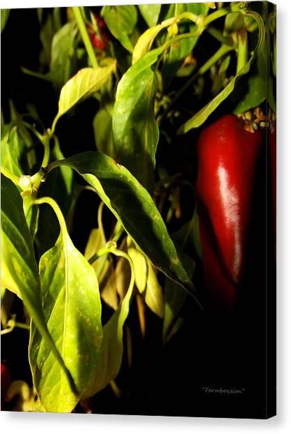 Anaheim Pepper Canvas Print