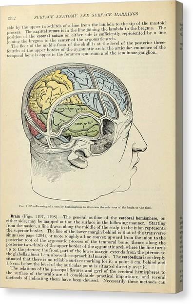 Anatomy Human Body Old Anatomical 126 Canvas Print